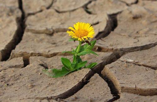 乾燥した大地に花