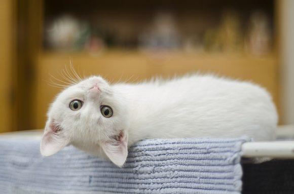 ふわふわ子猫