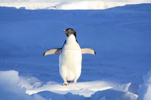 氷の中のペンギン